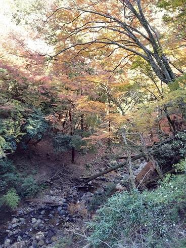 箕面公園-川-02