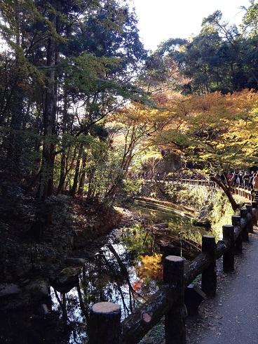 箕面公園-川-06