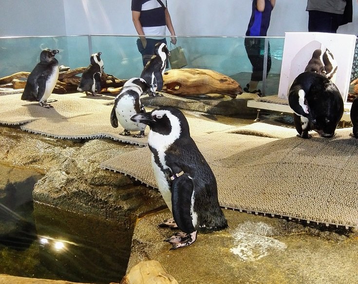 ペンギンは正義