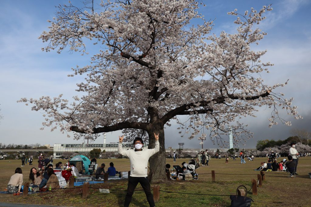 桜とチョッピー